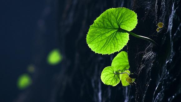 http://www.weixinrensheng.com/caijingmi/1453406.html