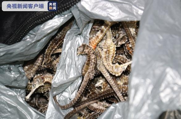 车厢传出腥臭味 竟是1.3万余尾国家二级保护动物海马干!图片