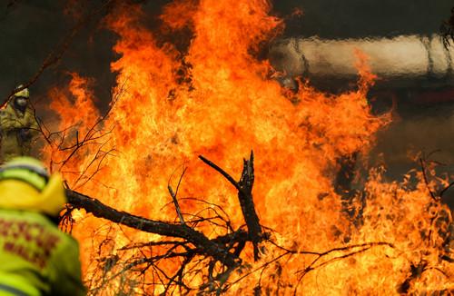 2019年11月11日,在澳大利亚新南威尔士州塔里附近的山地,消防员在扑灭山火。新华社记者 白雪飞 摄