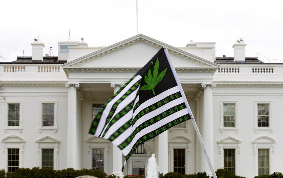 美民调:近7成美国人赞成大麻合法化 支持度创新高