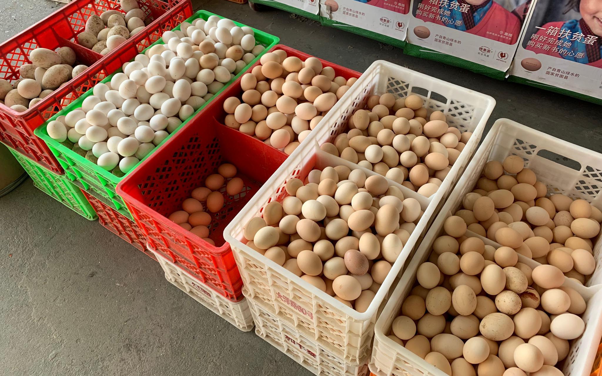 年前鸡蛋价格连续回落 节后很难反弹