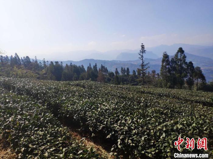 """贵州农产品""""出山""""受青睐 国际市场""""朋友圈""""越来越大"""