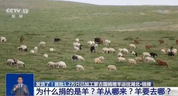 叮咚!蒙古国的羊,武大白衣战士已签收图片