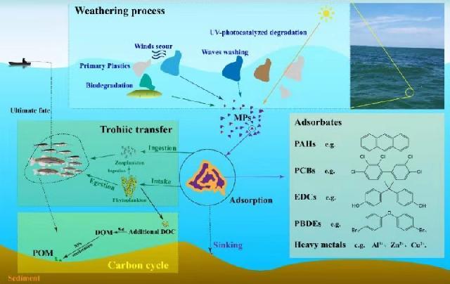 上海海洋大学微塑料研究入选ESI高被引论文