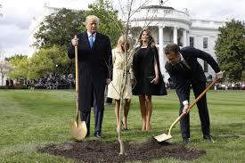2018年,特朗普与马克龙种树 图源:美媒