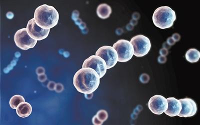 阳光视紫红质蛋白 生理功能首次获解析