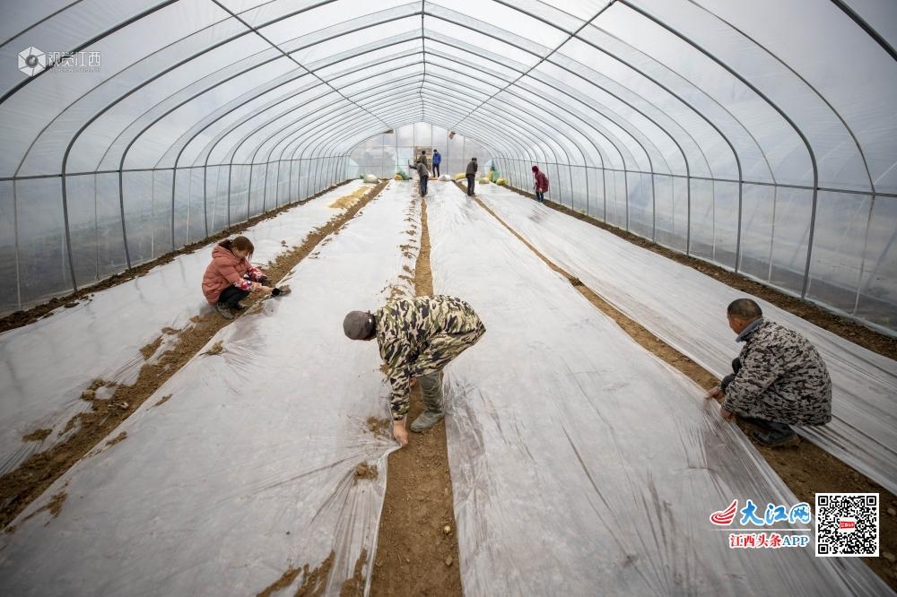 江西庐山:人勤春来早 大棚育种忙