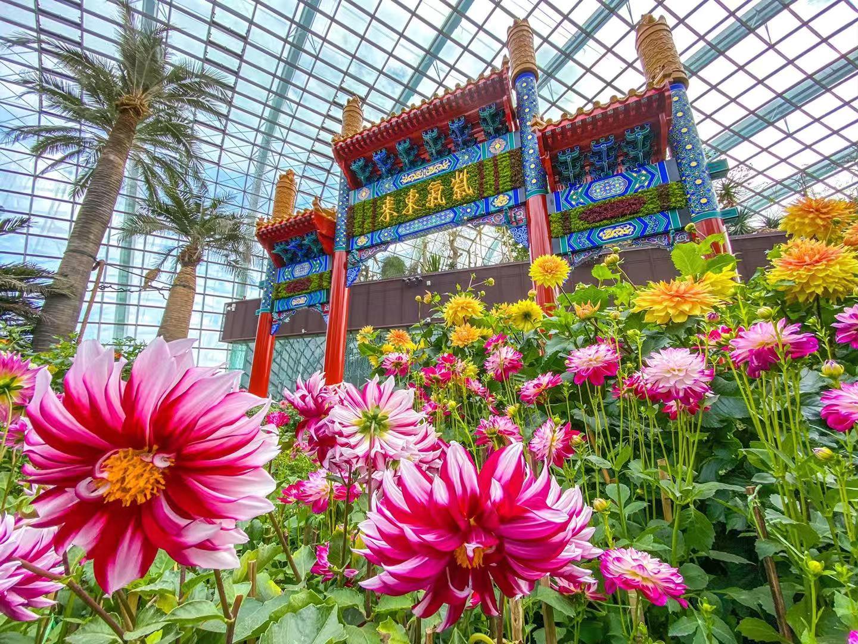 年味儿浓活动多,春节去新加坡别错过这些景点