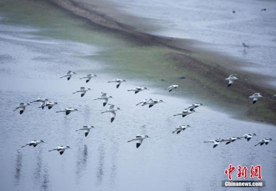 鄱阳湖去年总磷浓度为0.069mg/L 水质呈现改善趋势