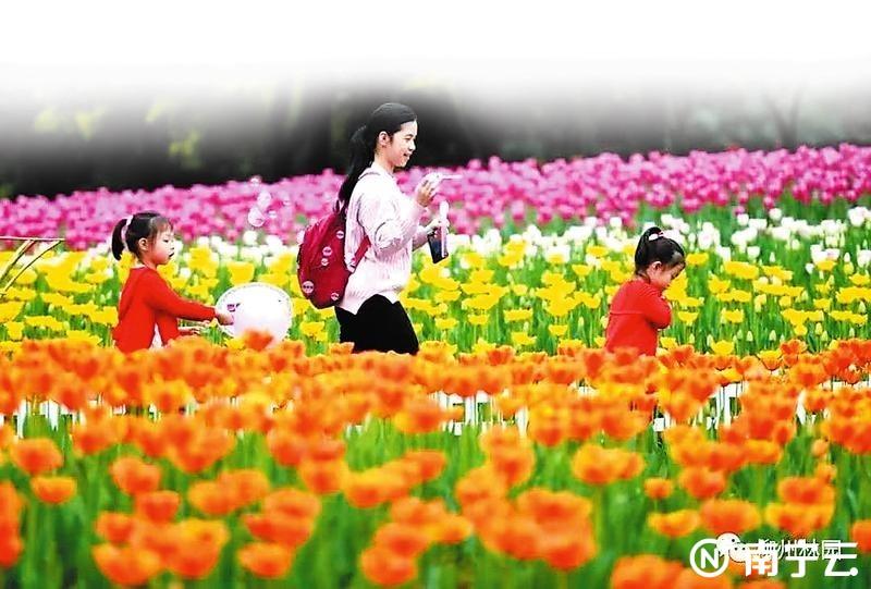 春节哪最好玩?广西各地精彩活动都给你整理好了