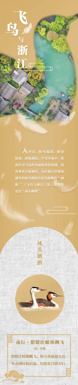 """飞鸟与浙江⑥丨头扎""""小辫""""身披""""斗篷"""" 它是潜水高手图片"""