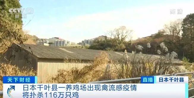 警报拉响!已扑杀460多万只鸡 日本再现禽流感疫情