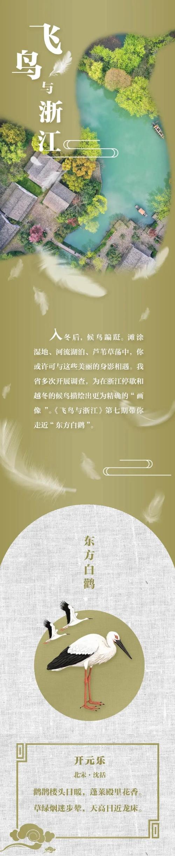 """飞鸟与浙江⑦丨它是""""鸟界国宝"""" 休息时喜欢单足站立图片"""