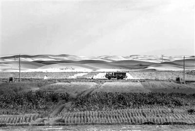 """""""智慧""""力量加盟内蒙古沙漠里瓜果飘香"""