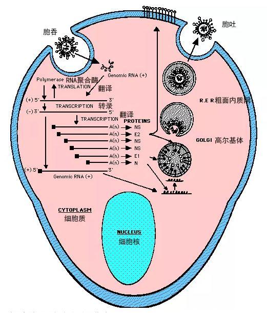 从这场新冠状病毒肺炎中,我们可以总结出这些高考热点(高中生速看)