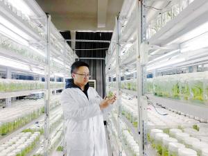 这家昆企用科技创新打通药用植物产业链