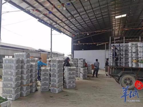 没必要抢购囤货!广东超50家农产品支柱企业联合行动