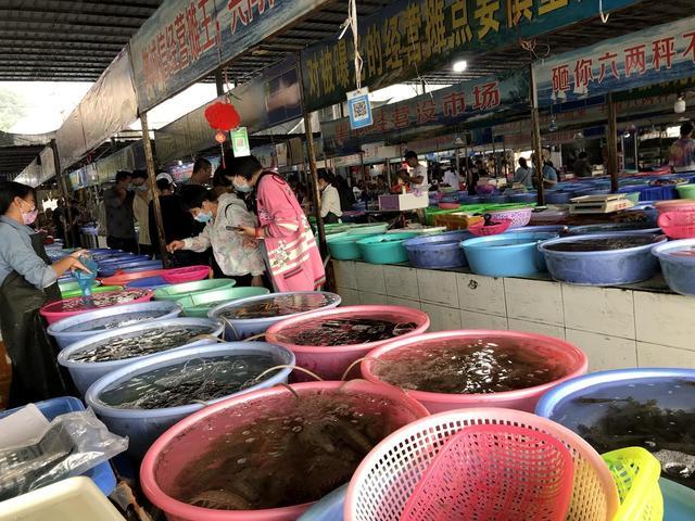 涠洲岛海鲜市场,龙虾、海胆、皮皮虾、石斑鱼,超多品种
