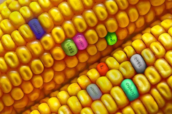 """四连板!国产转基因获批,大北农要做中国的""""孟山都""""?"""