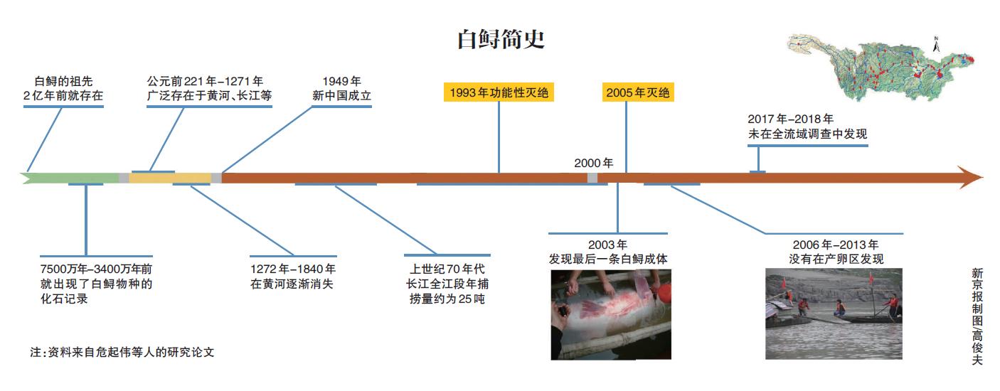 长江白鲟宣告灭绝,2003年后再无白鲟实体现身图片
