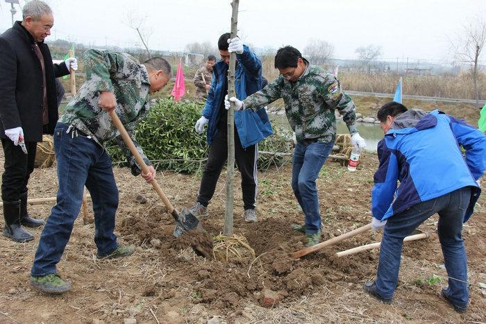 富阳区开展新年义务植树活动