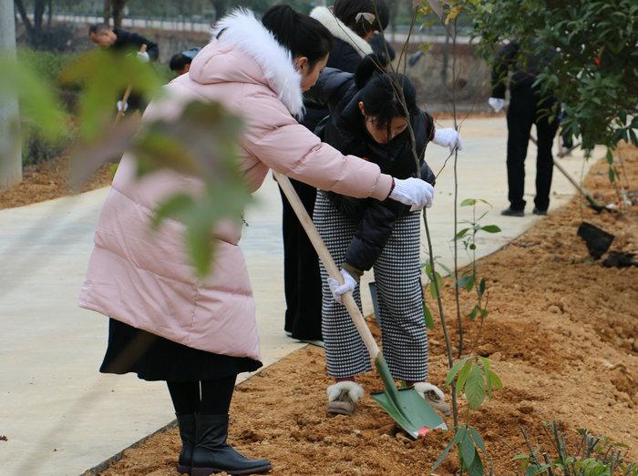 """2020年从""""林""""开始——龙游县开展义务植树活动图片"""