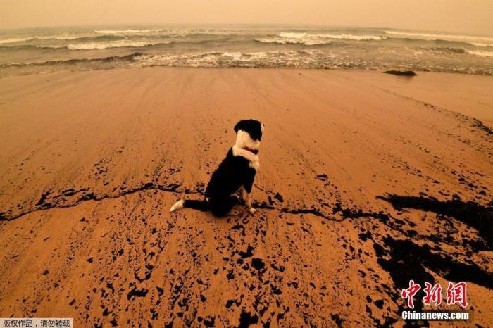 当地时间1月5日,澳大利亚新南威尔士州的梅里姆布拉,海滩被丛林大火的灰烬染黑。