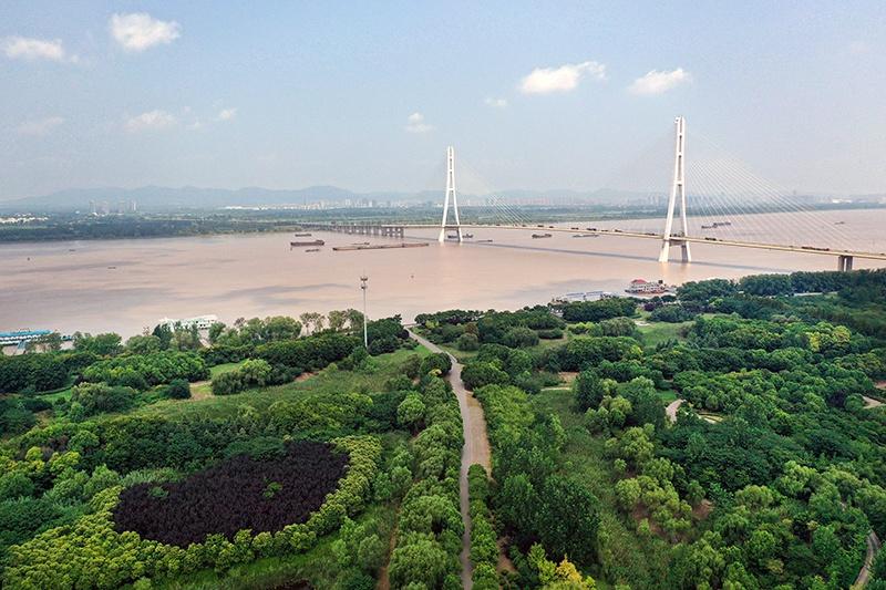 江苏南京雨花台区辖区内的三桥湿地公园毗邻南京长江第三大桥