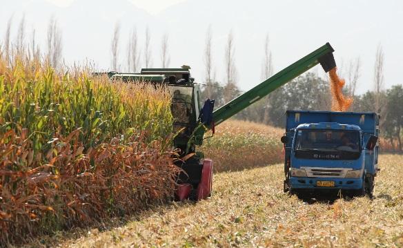 无角牦牛、高产玉米 2019十大农业科技进展发布图片