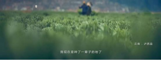 """在这个领域,中国为地球撑起""""保护伞""""图片"""