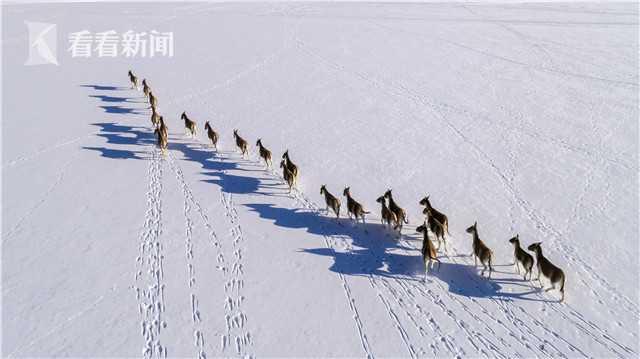 视频|三江源国家公园将于今年正式设立