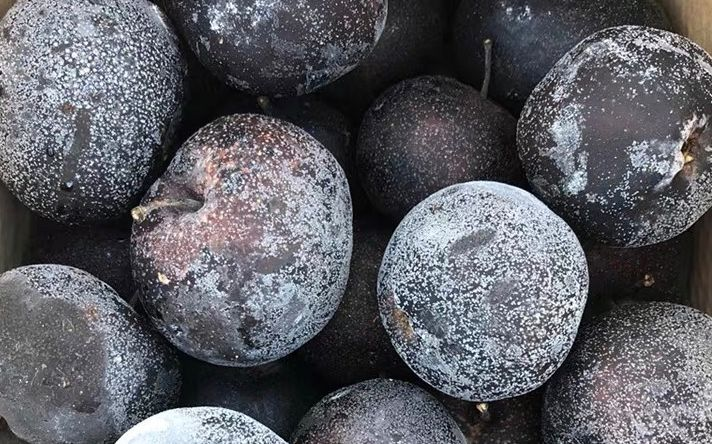 """北京人都知道冻柿子 """"黑暗料理""""冻梨您见过吗图片"""
