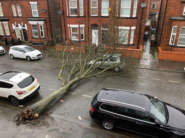 被风暴斩断的树压在轿车上。(图片来源:《镜报》)