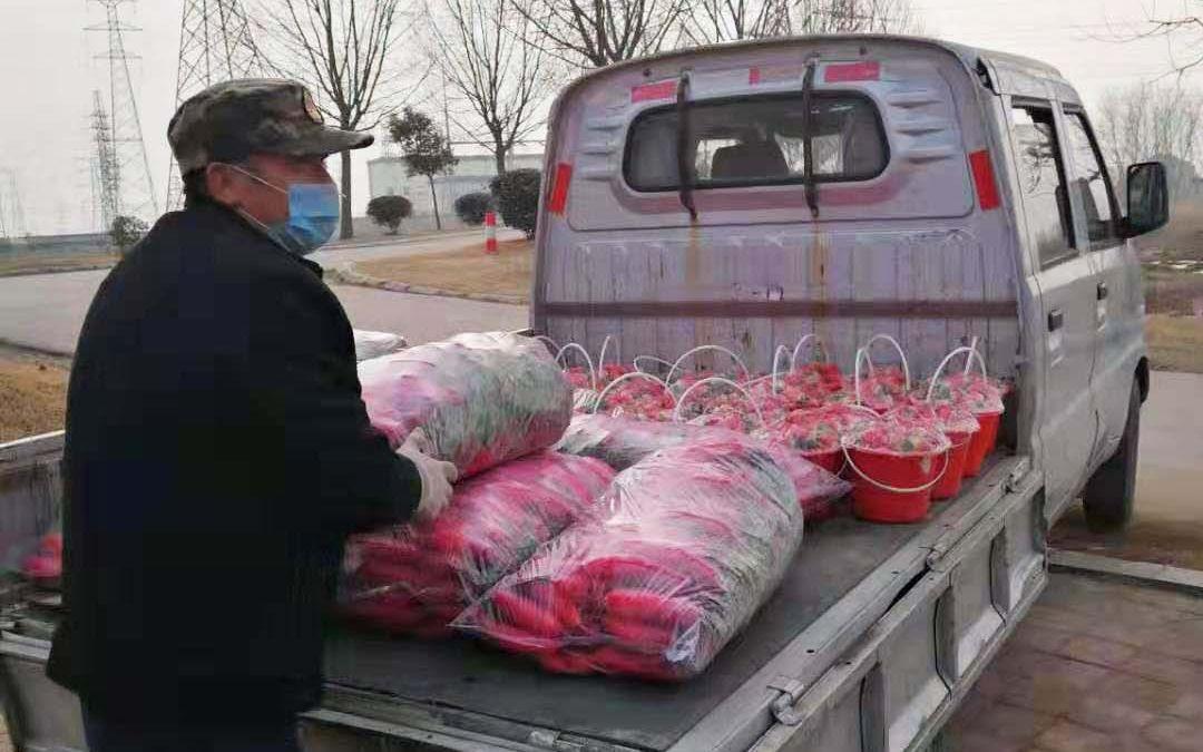 山东莒南县:上门收农户百吨果蔬 上门送菜手机就能下单图片