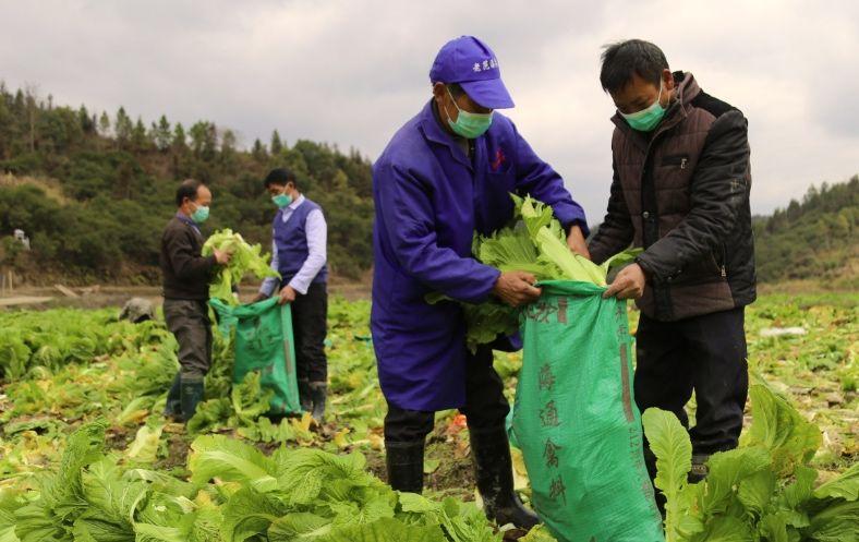 池塘村近20吨扶贫蔬菜面临滞销 企业采购后进行捐赠图片