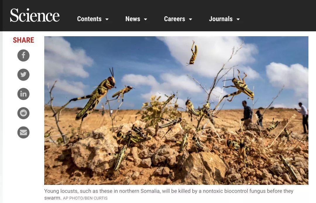 东非沙漠蝗虫肆虐 上千万民众陷缺粮危机