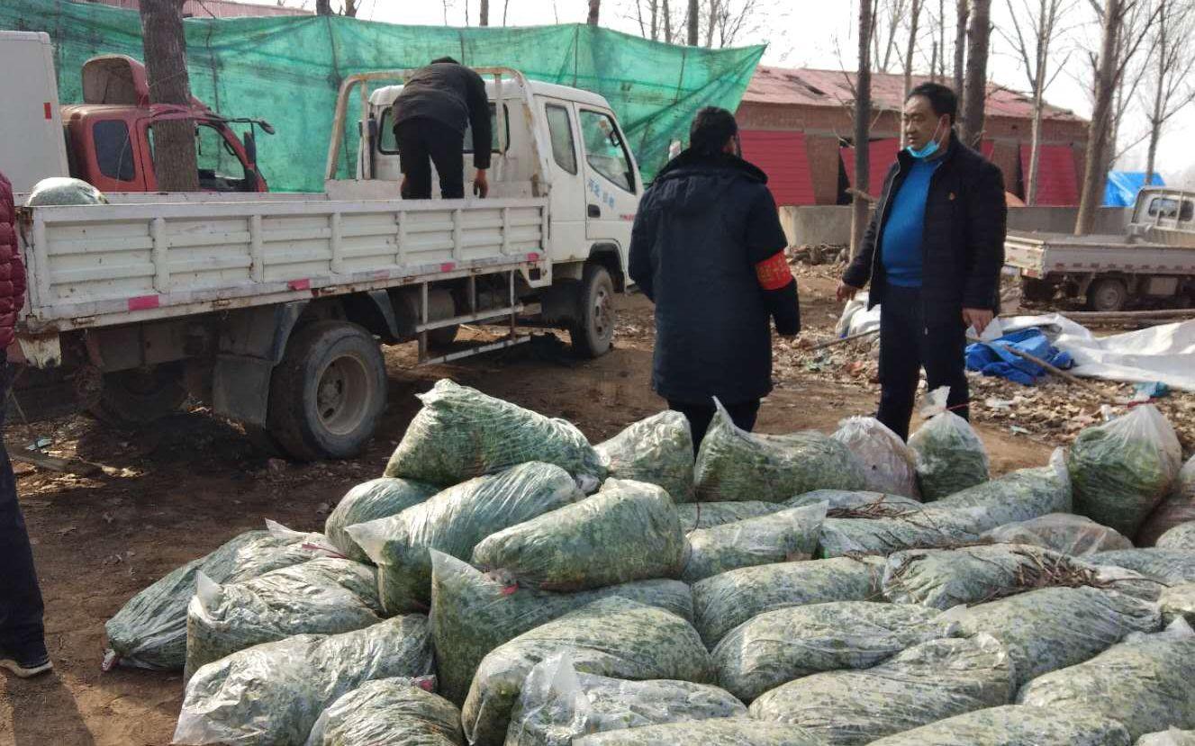 这个村支书把自家滞销的20万斤香菜送给了全县人