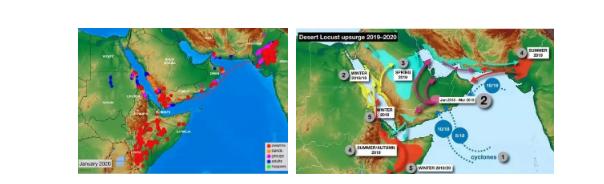 联合国粮农组织公布的不同形态蝗虫分布图和沙漠蝗虫迁徙图