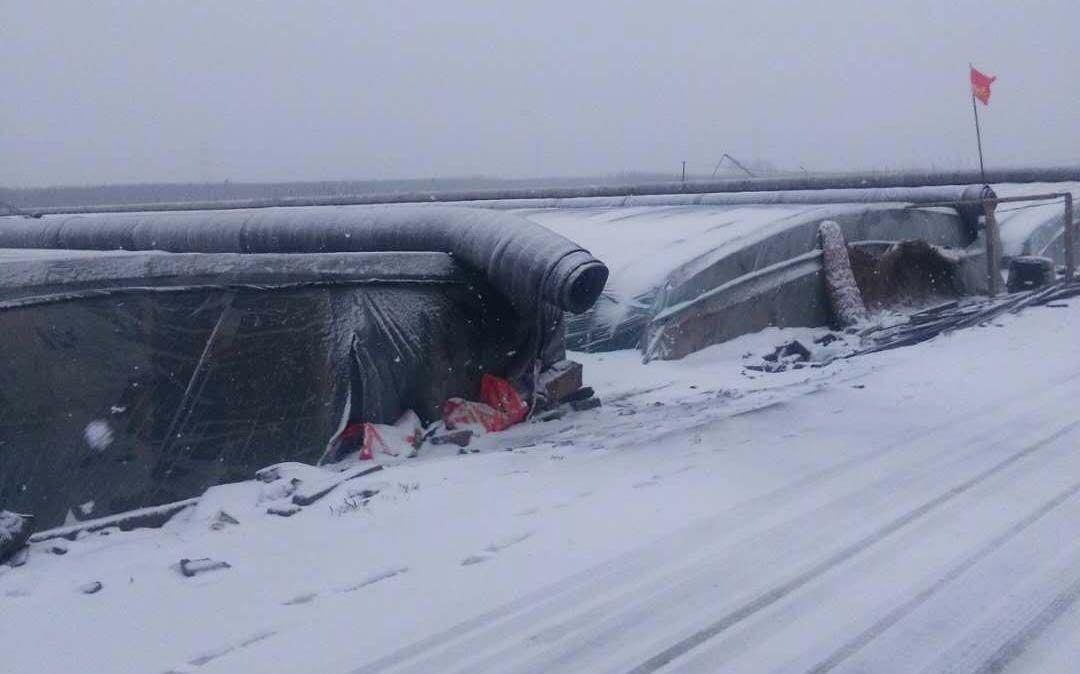 莒南县下起了小雪。受访者供图