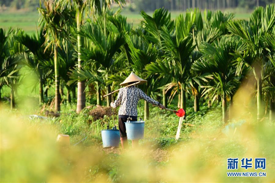 海南琼海:绿野田园春管忙-新华网海南频道
