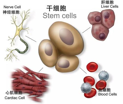 视频|沈银忠:干细胞技术治新冠肺炎 有可能但需要时间图片