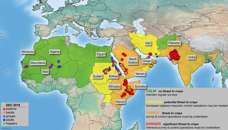 蝗灾来临?联合国宣布进入紧急状态?真相来了图片