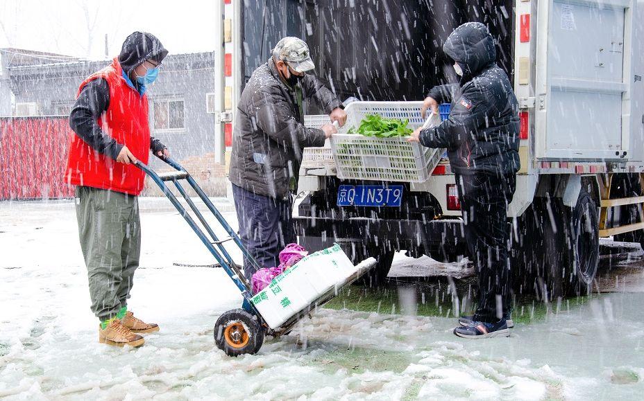 启用太阳能给大棚加温 顺义李桥特菜基地加紧蔬菜供应图片
