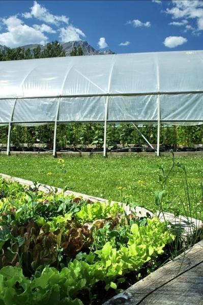 """甘肃颐年商贸""""特殊植物用太阳光转换膜的开发""""项目—— 减少化肥的使用量 破解农业困境"""