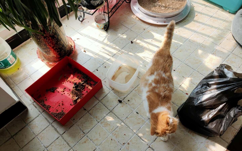 武汉留守宠物救助停止 宠物或将面临死于家中危险图片