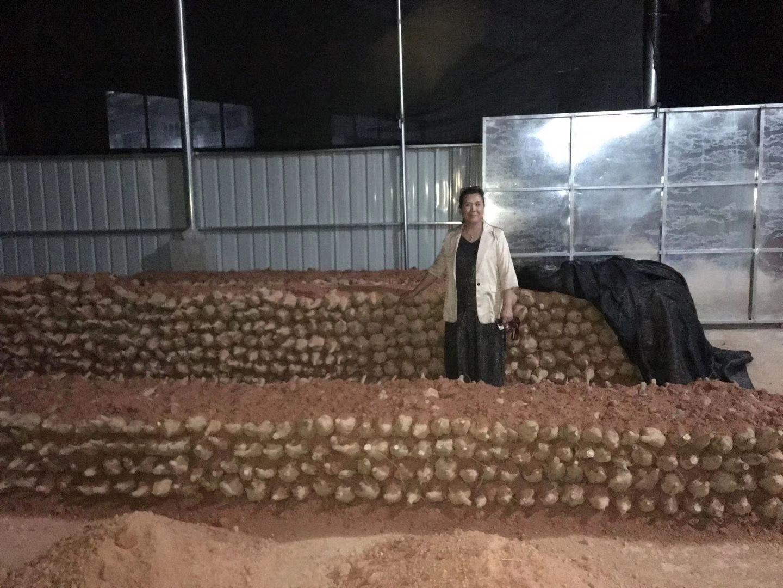 广东肇庆合作社500吨葛根滞销:亏损没钱给农民发工资图片