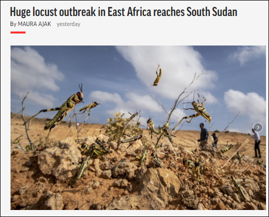 约2000只蝗虫侵入南苏丹,约旦宣布进入紧急状态