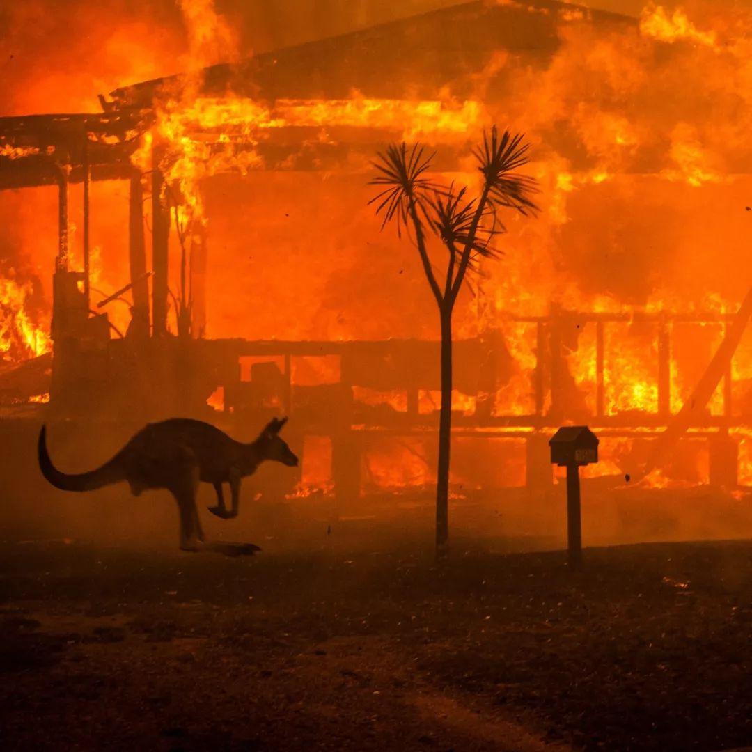 蝗灾泛滥,灾难的全球化时代来临?