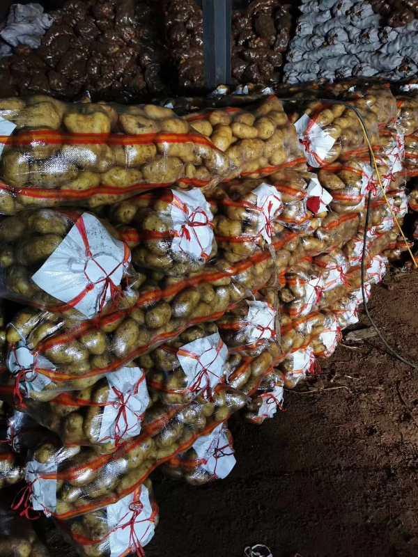 """上万吨农产品滞销,资金链断裂,乌兰察布市组团""""一起卖图片"""