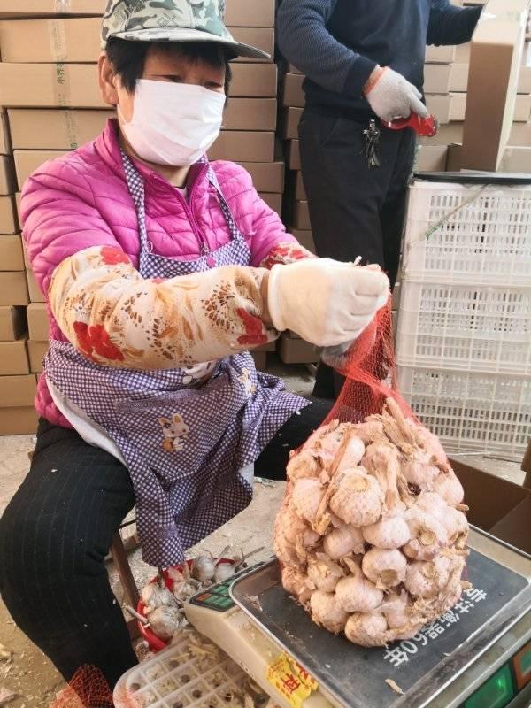 新蒜都快上市了,冷库还有100多吨,金乡大蒜滞销愁坏农人
